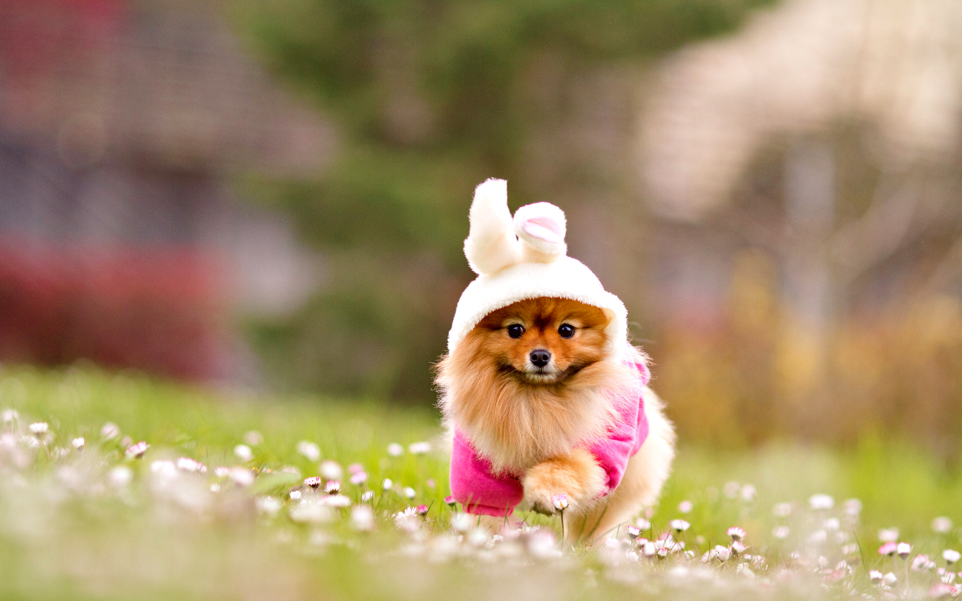 adorable dog wallpapers 1920x1200 1336266