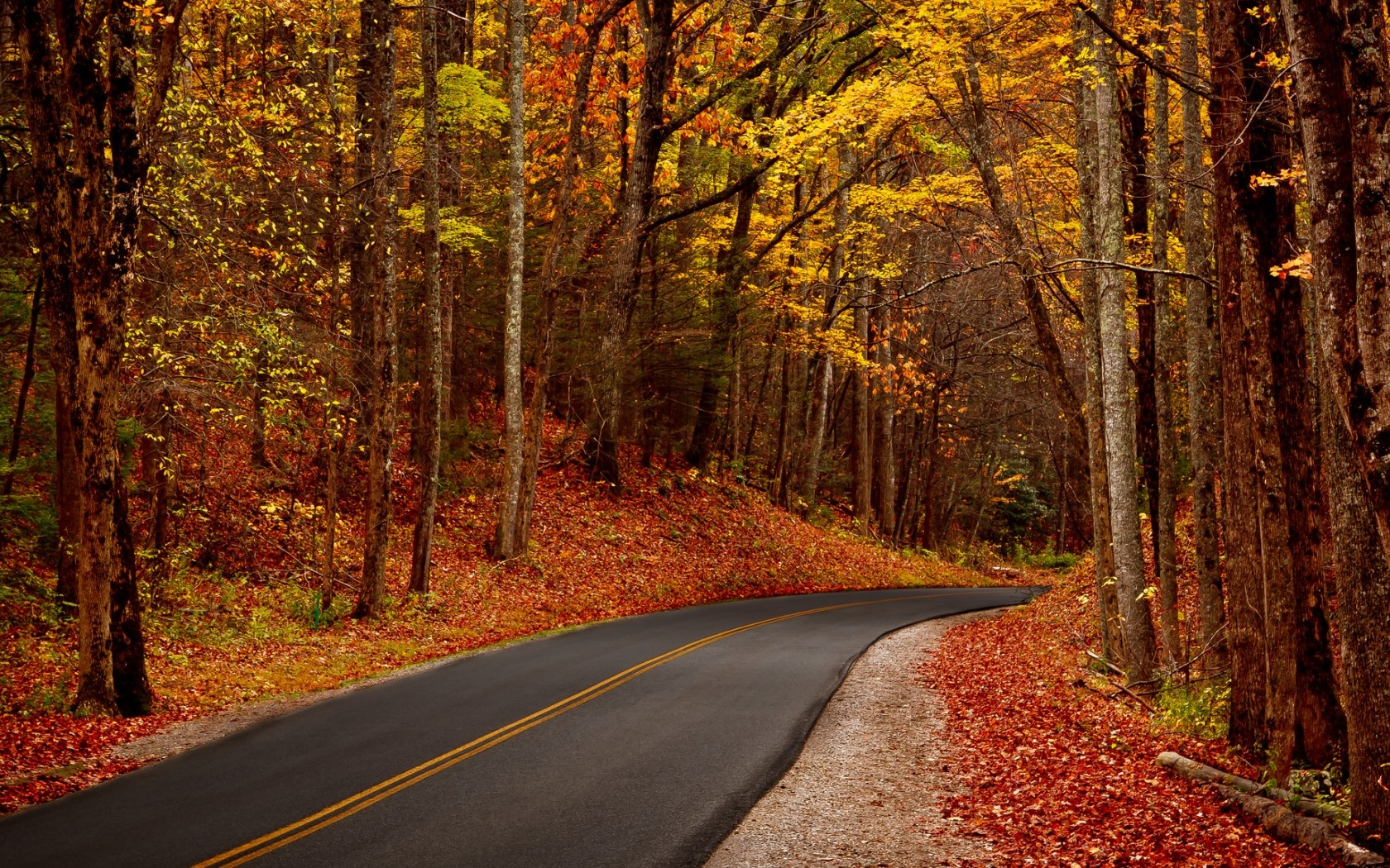 Autumn Leaves Forest Road