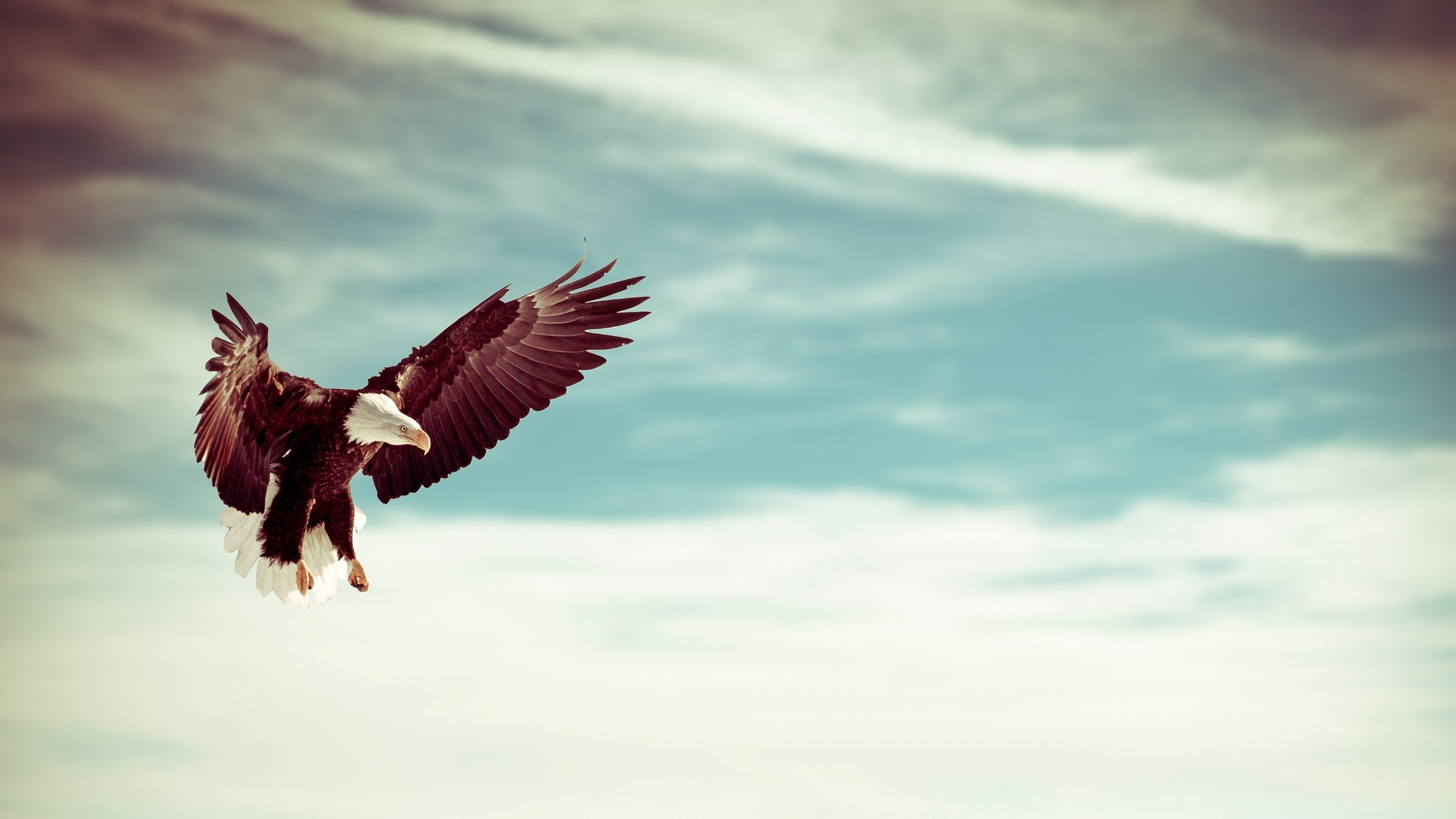 Beautiful Eagle Bird Flying Sky Wallpapers - 1920x1080 ...