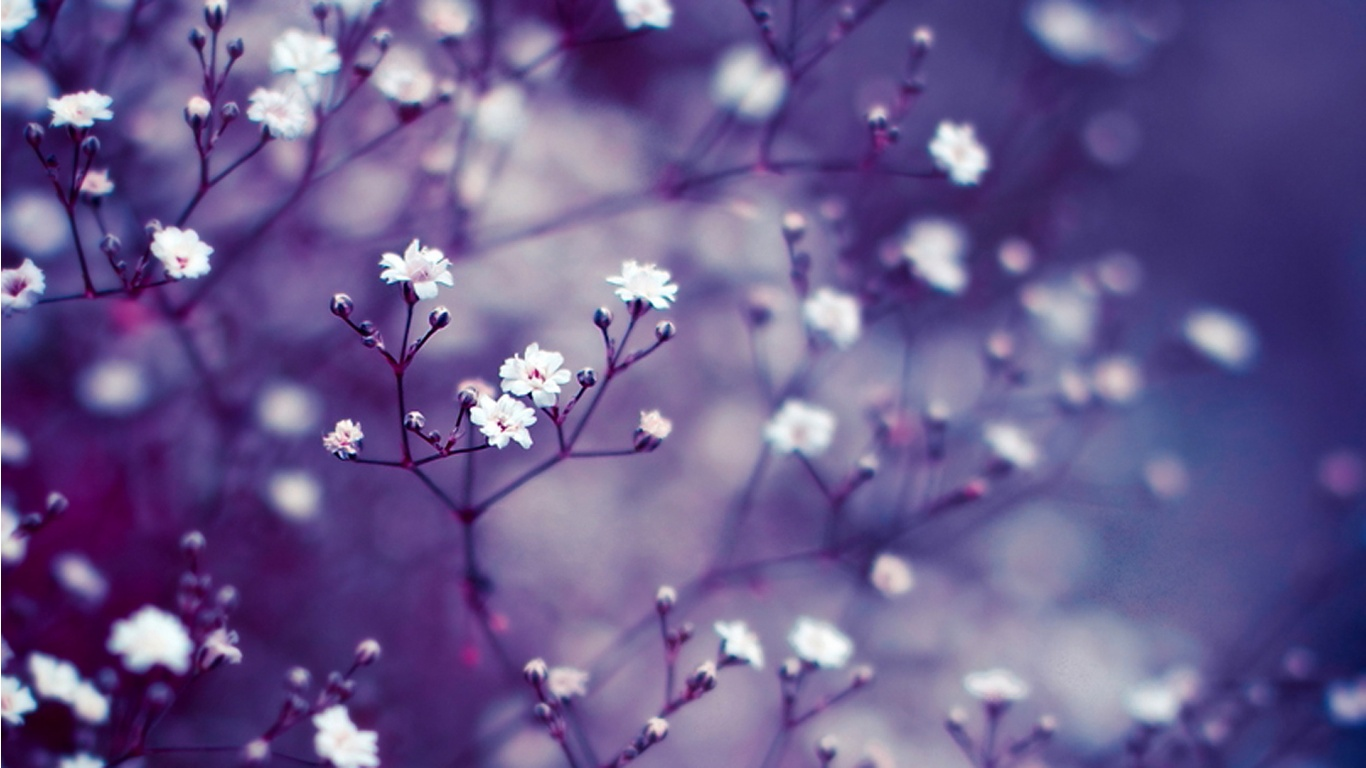 Beautiful Macro Flowers Wallpapers