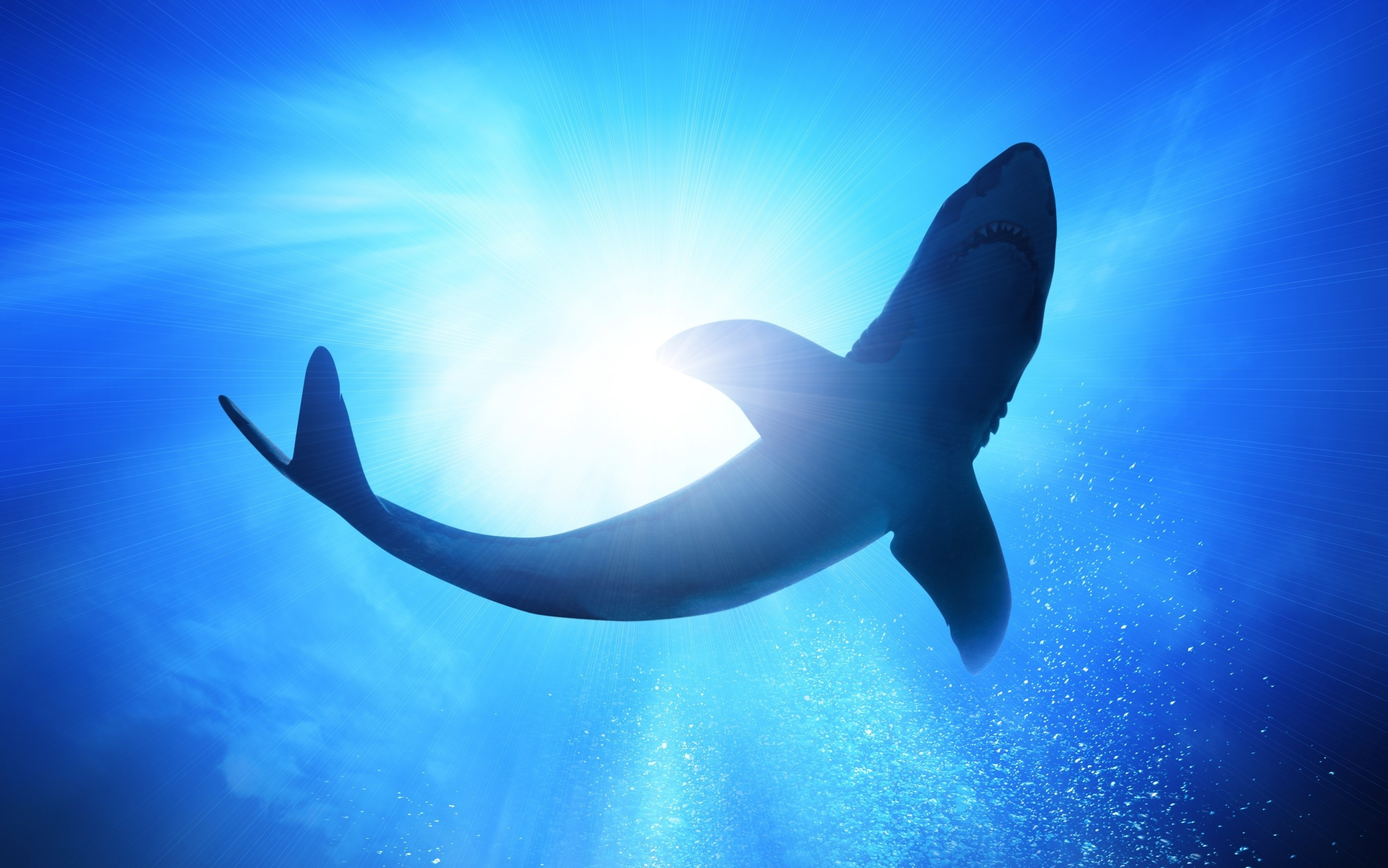download wallpaper shark 1600 - photo #43