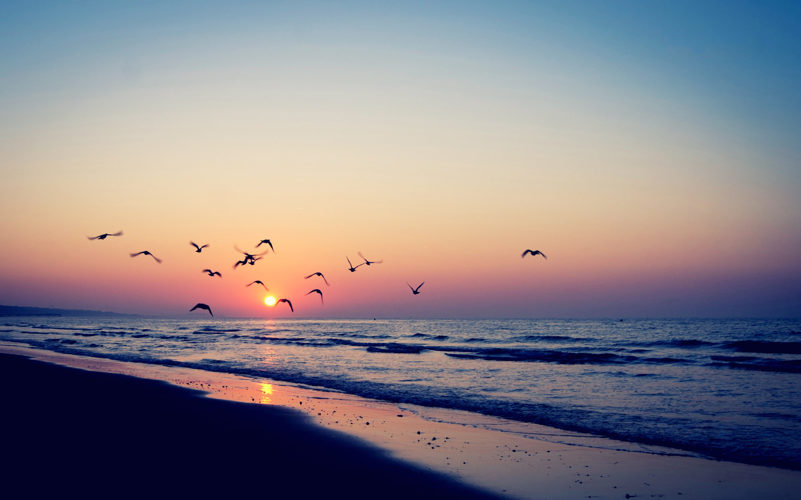 View Birds Flying At Sunset 2560x1600