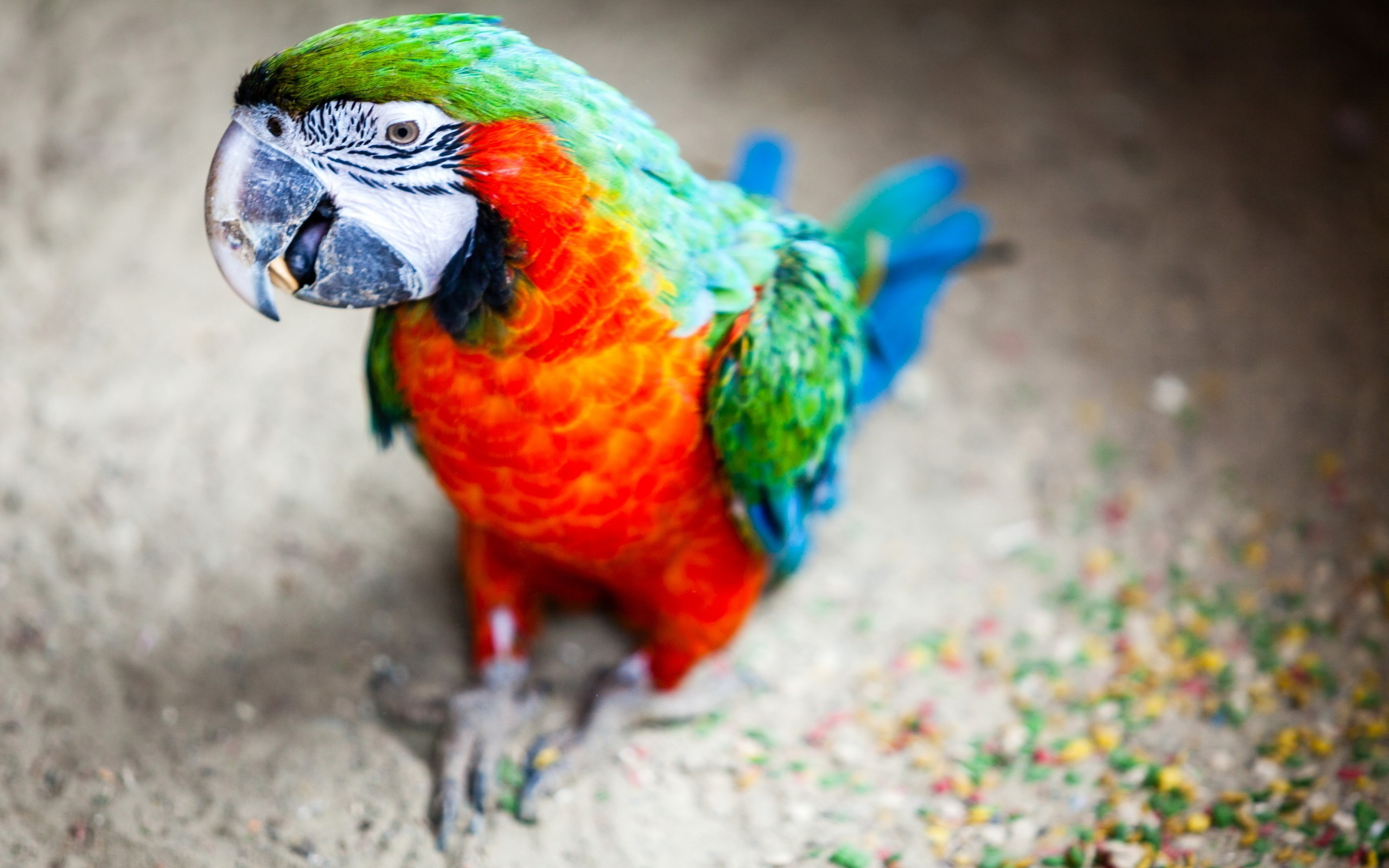 ColorFul Parrot...
