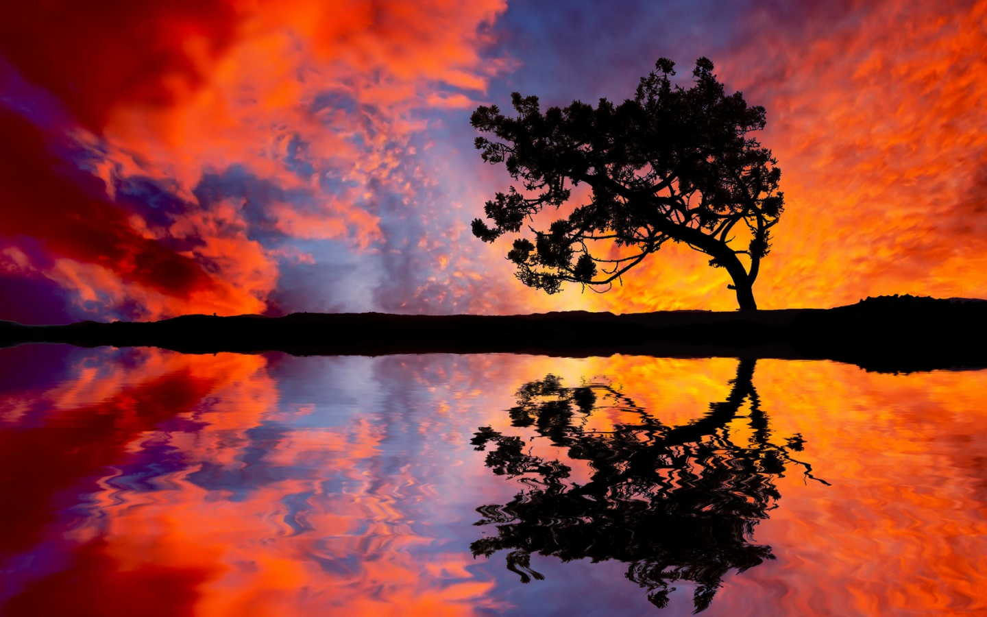 Colorful Sunset Sky And Tree Wallpapers
