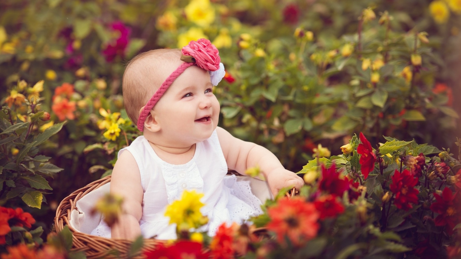 Cute Girl With Rose Cute Baby With Rose Cute Girl