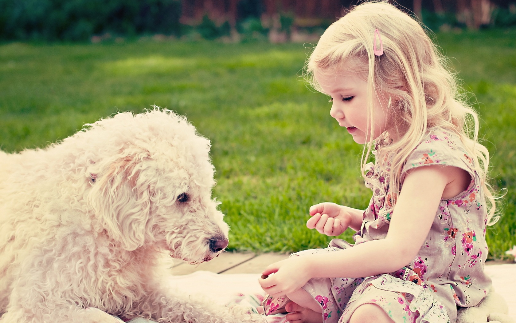Cute girl and dog 1680 x 1050 download close