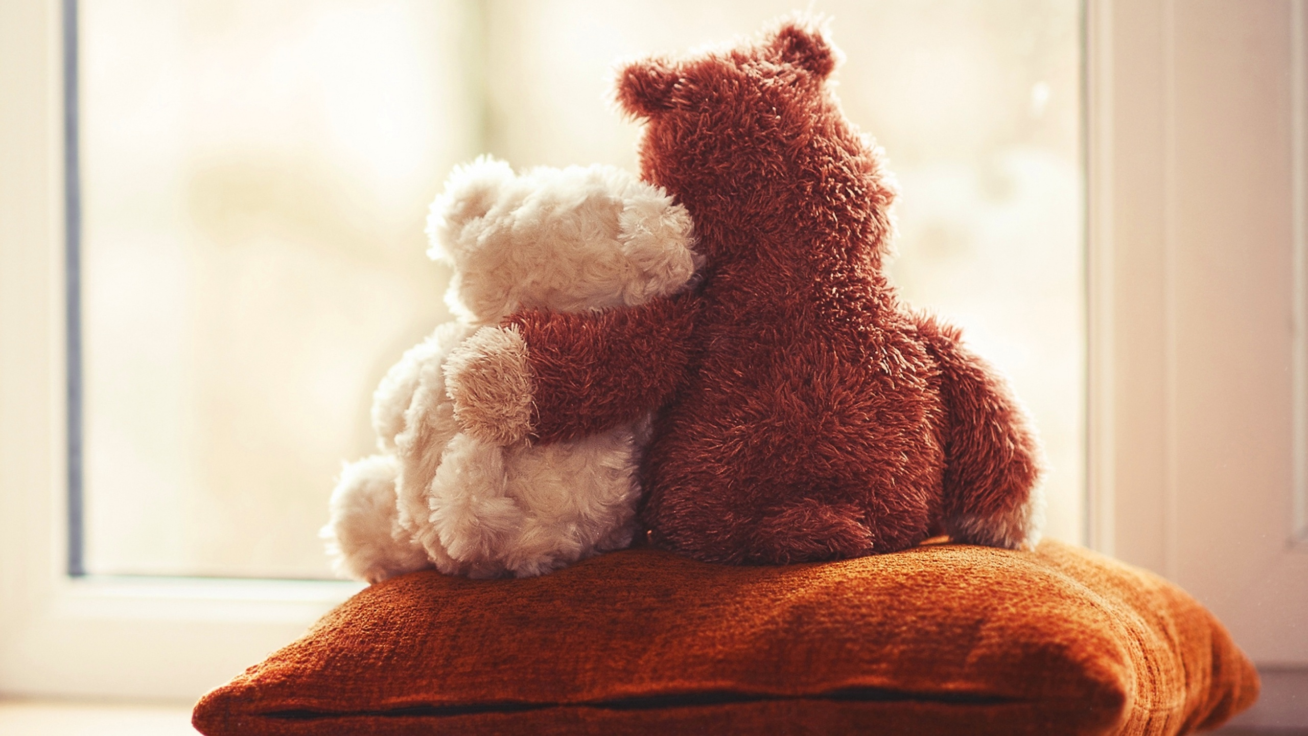 cute Teddy Bear couple Love Wallpapers - 2560x1440 - 817295