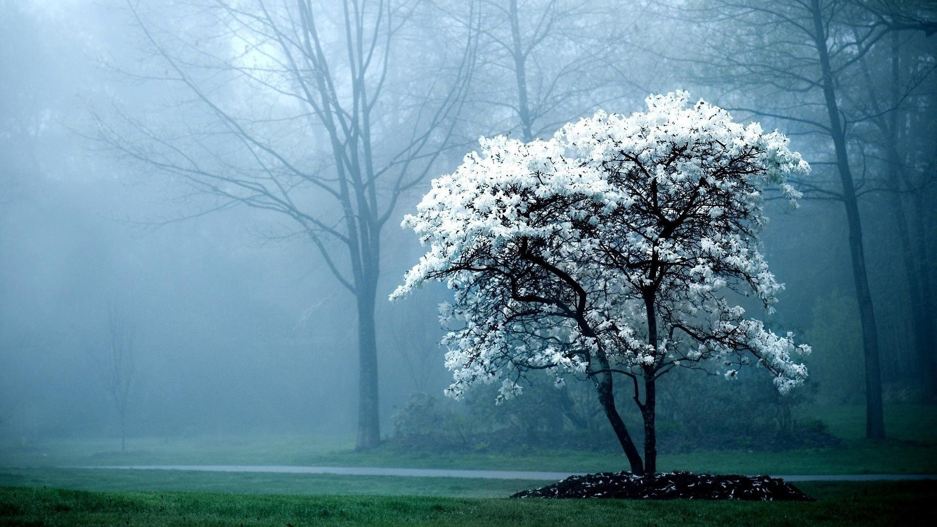 Early Morning Fog  1920 x 1080  Download  Close