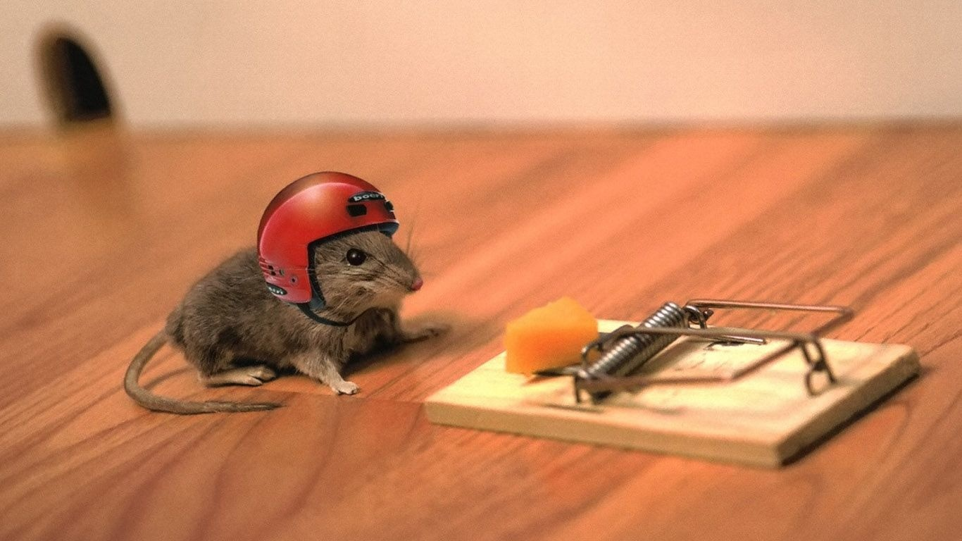 Funny Mouse | 1366 x 768 | Download | Close