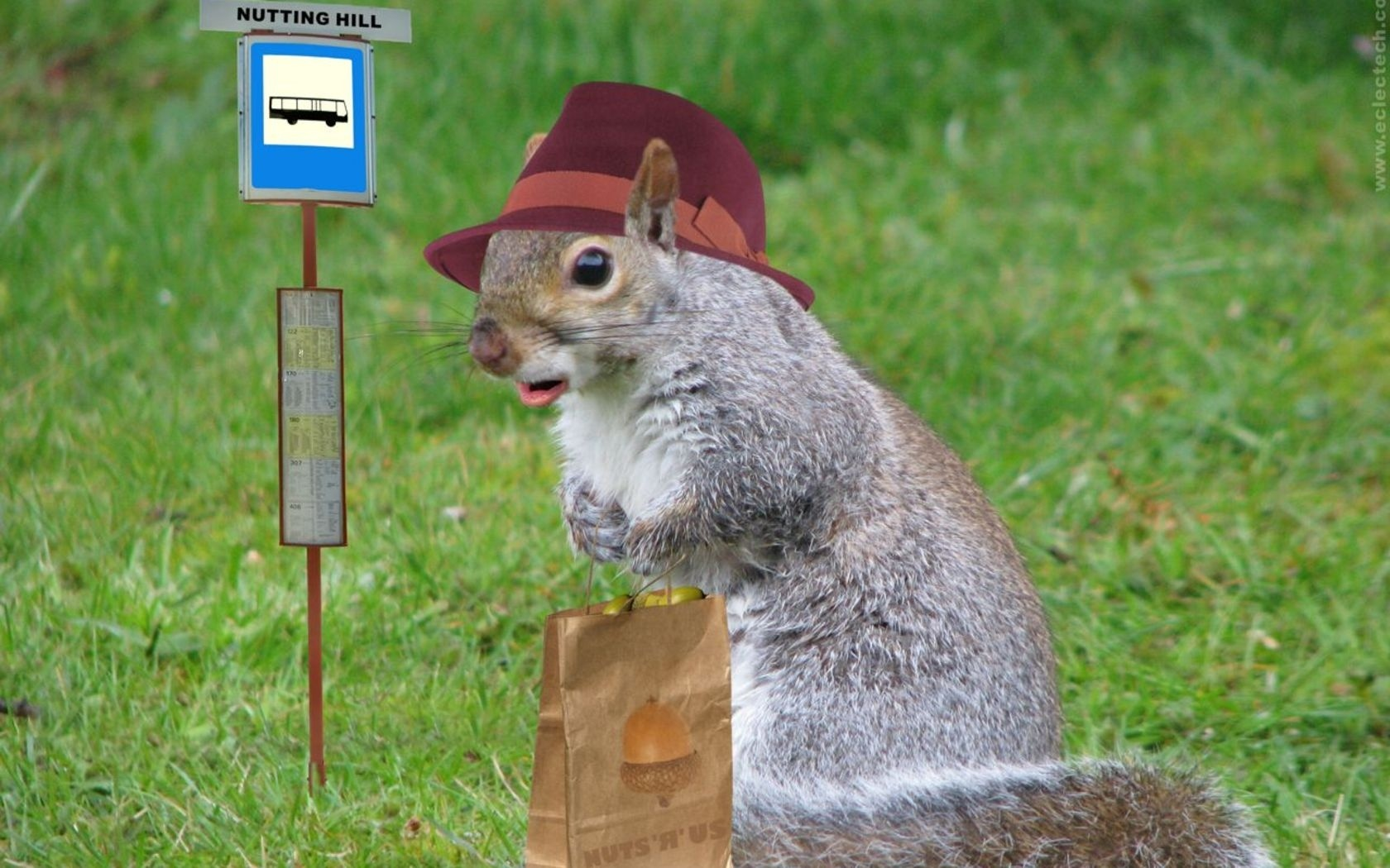 Funny world funny squirrel images - Funny squirrel backgrounds ...