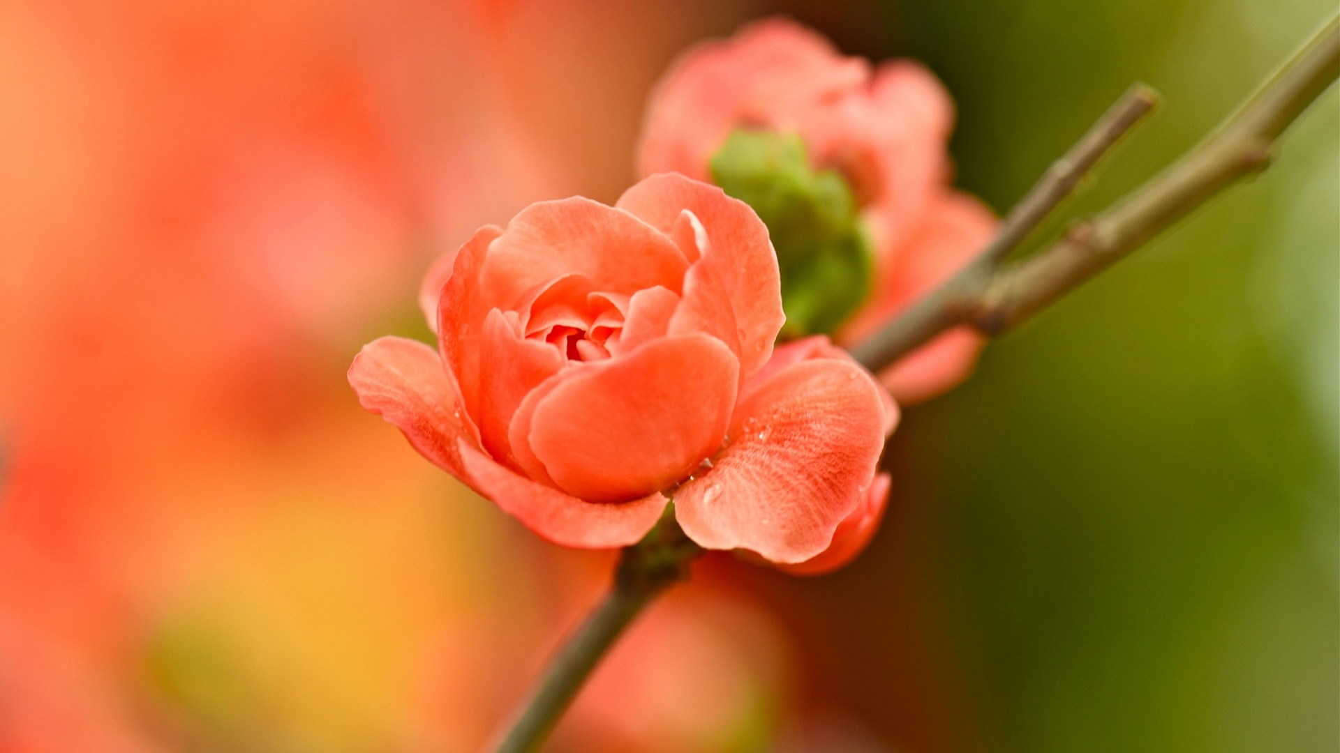 Garden Branch Orange Flower  Download Close