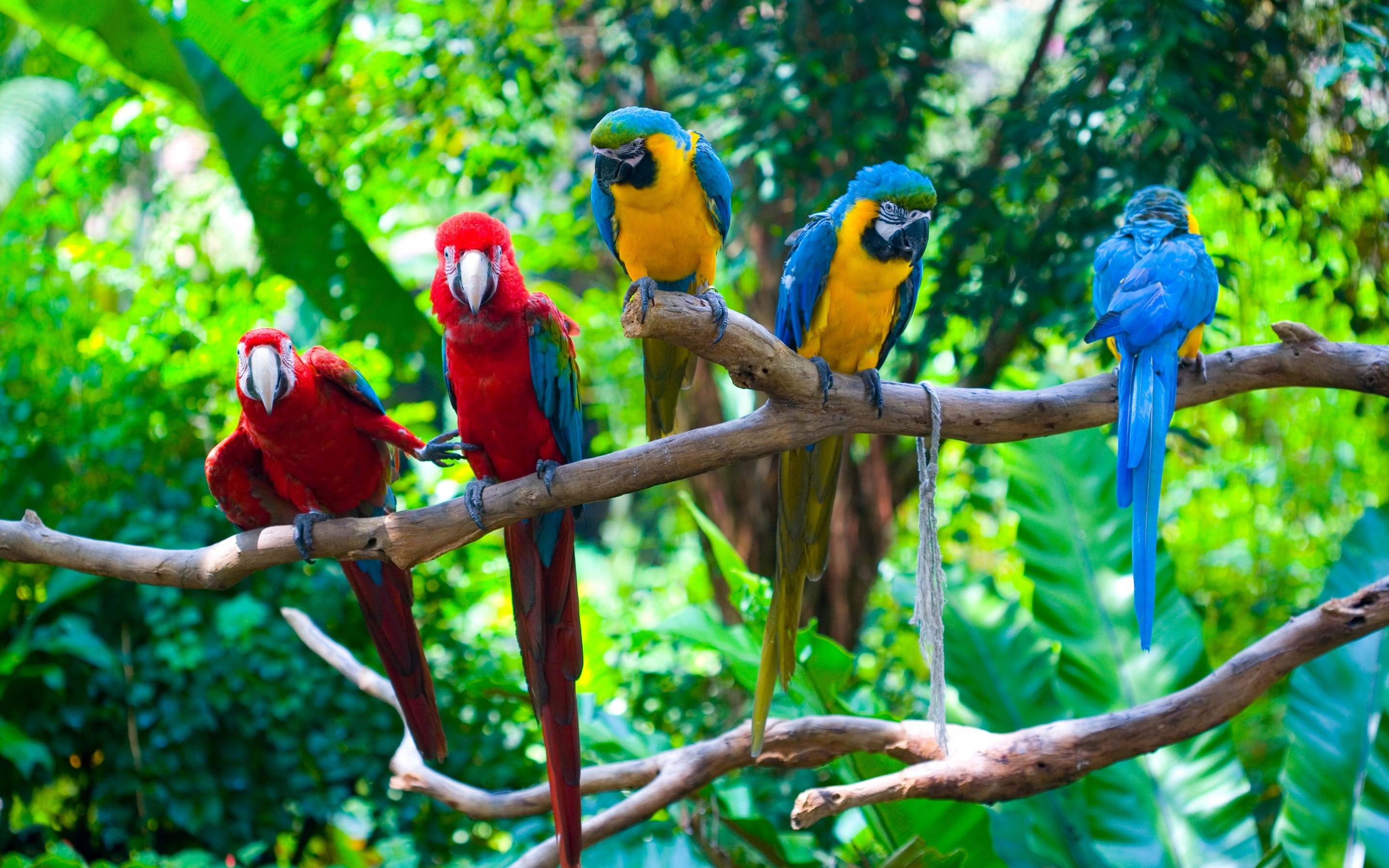 Green Parrots Birds On Branches Wallpapers 2880x1800