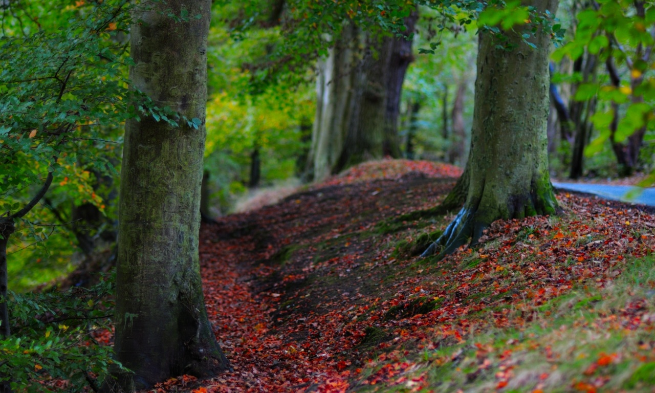 Green Tree Near Autumn Leaves Wallpapers 1280x768 396159