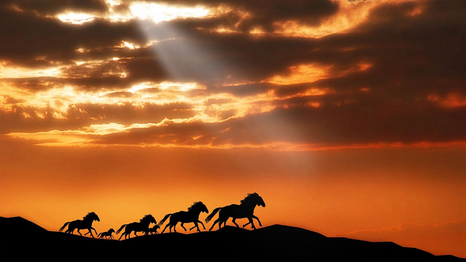 horses running at sunset wallpapers 1600x900 262243