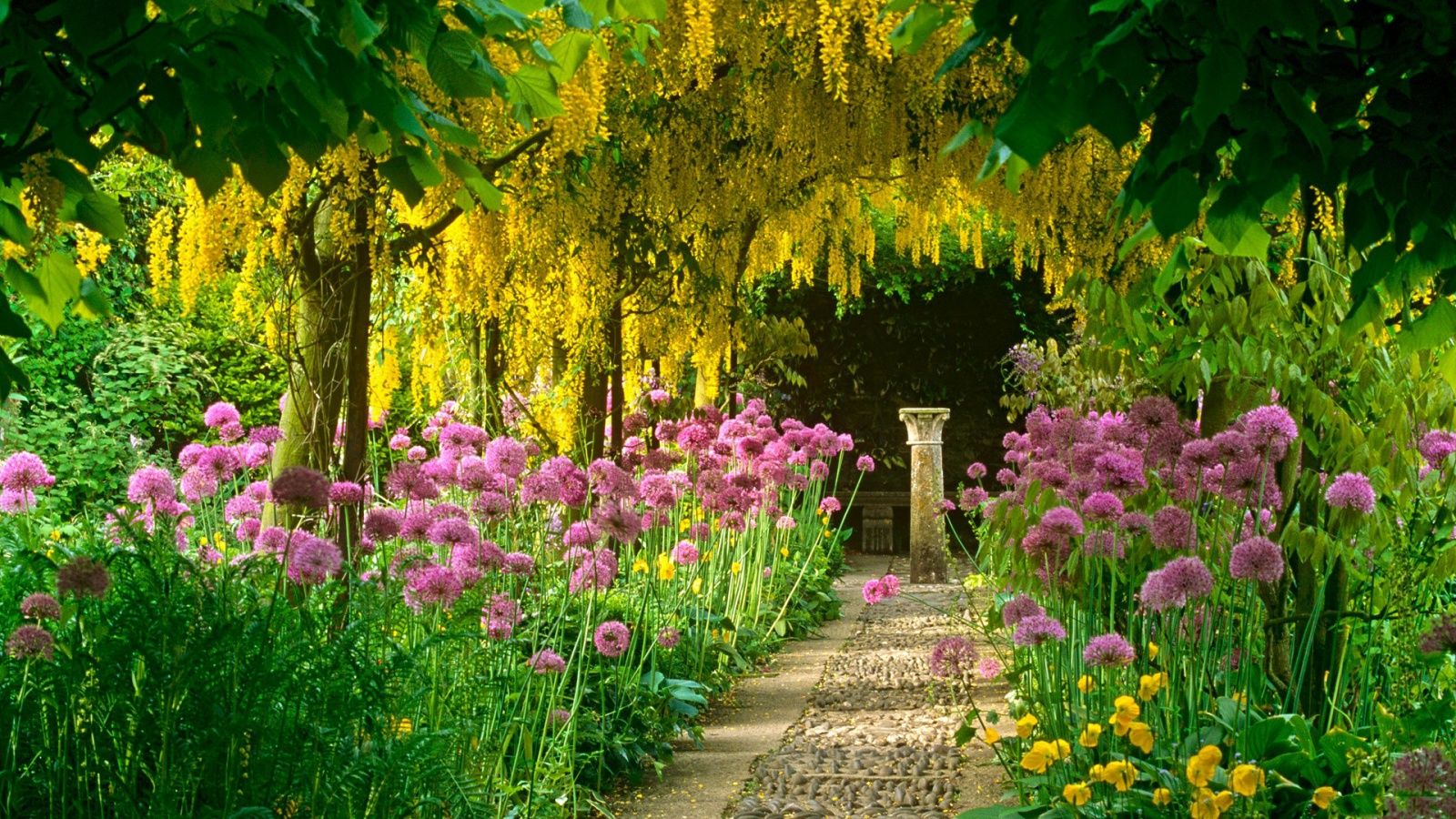 laburnum tree blooming garden 1600x900 - Tree and flower lined avenues and roads