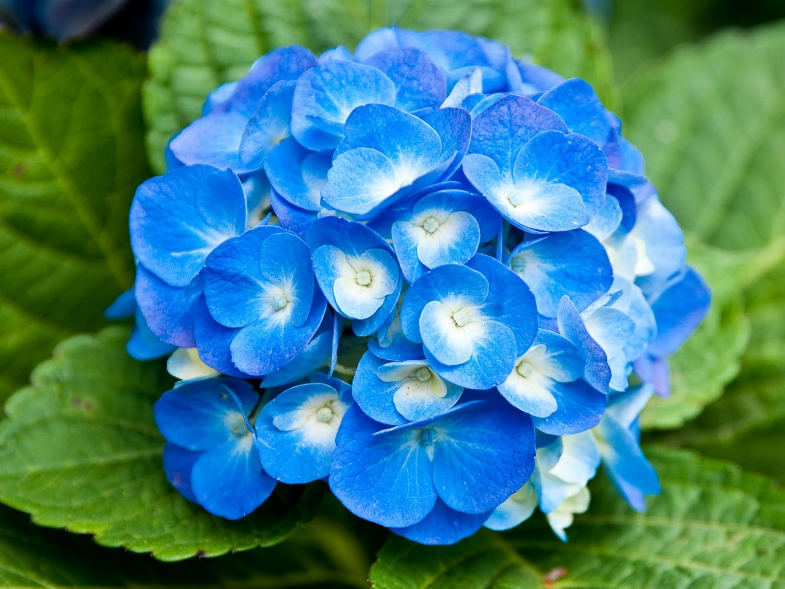 light_blue_flowers-1600x1200.jpg