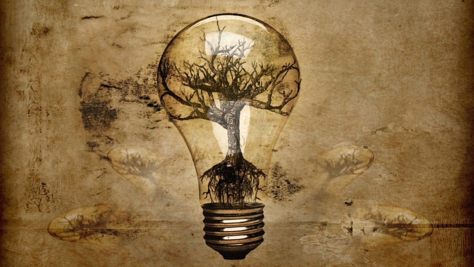 light bulb in tree roots wallpapers 1600x900 549156
