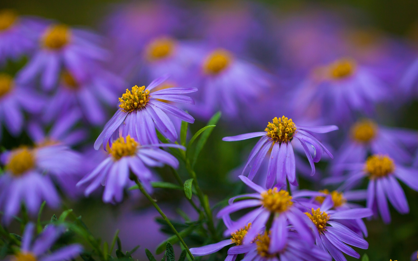Beautiful Purple Flowers