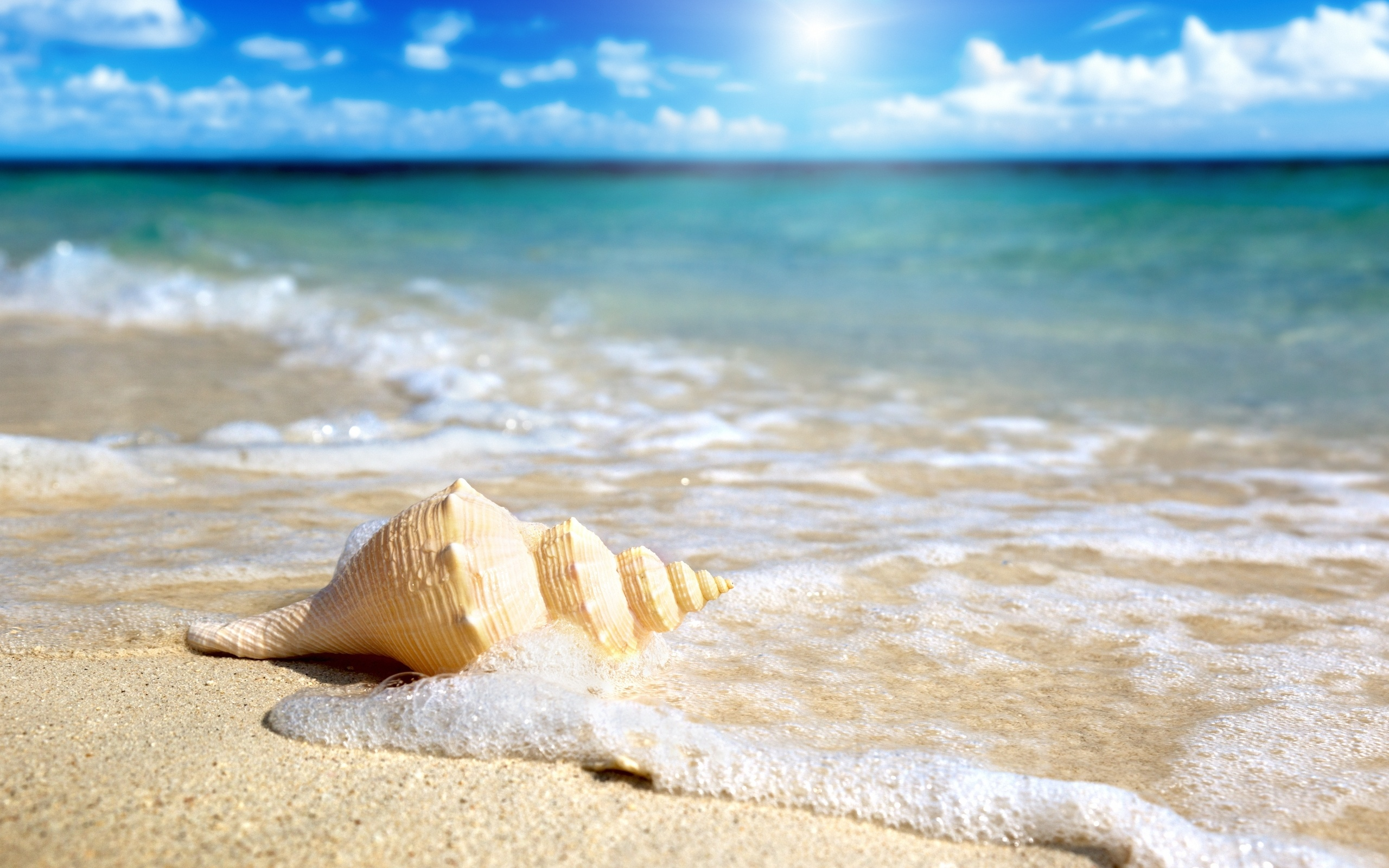 Shell on the beach 2560 x 1600 download close