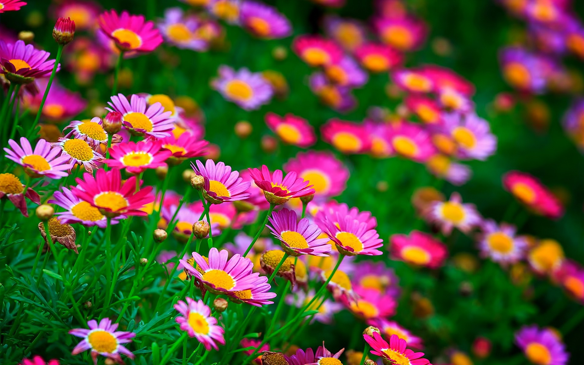 Summer Little Flowers Meadow Wallpapers