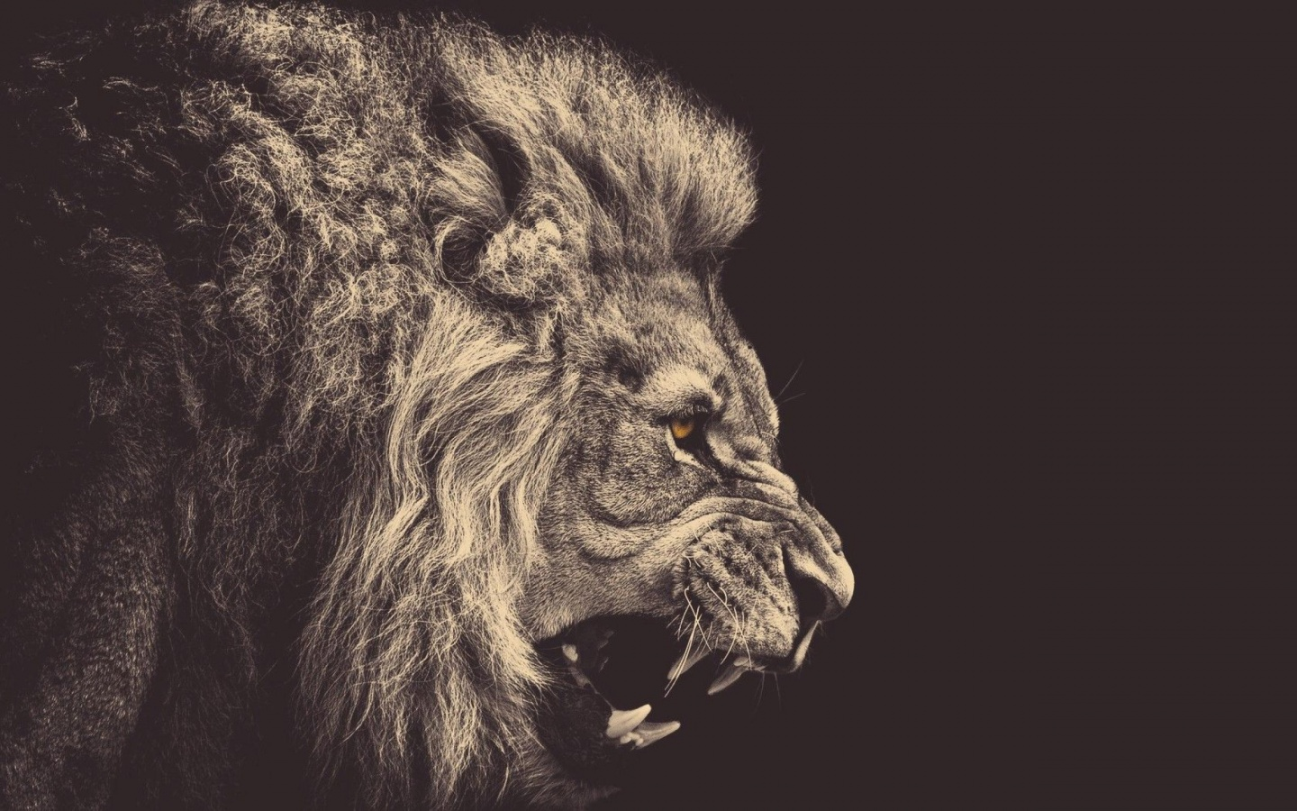 Lion hipster - photo#18