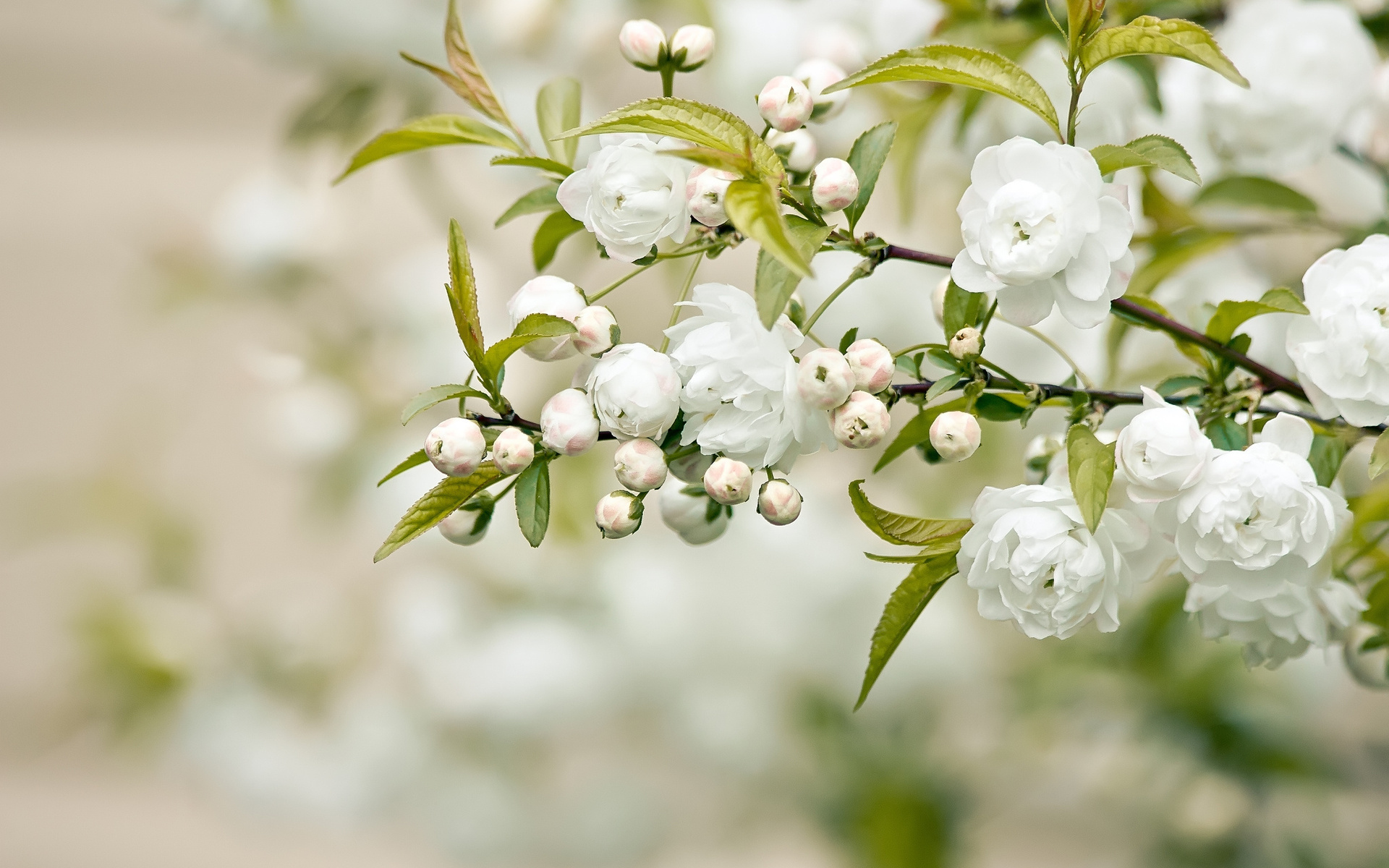 White Flowers Blooming Pic Source