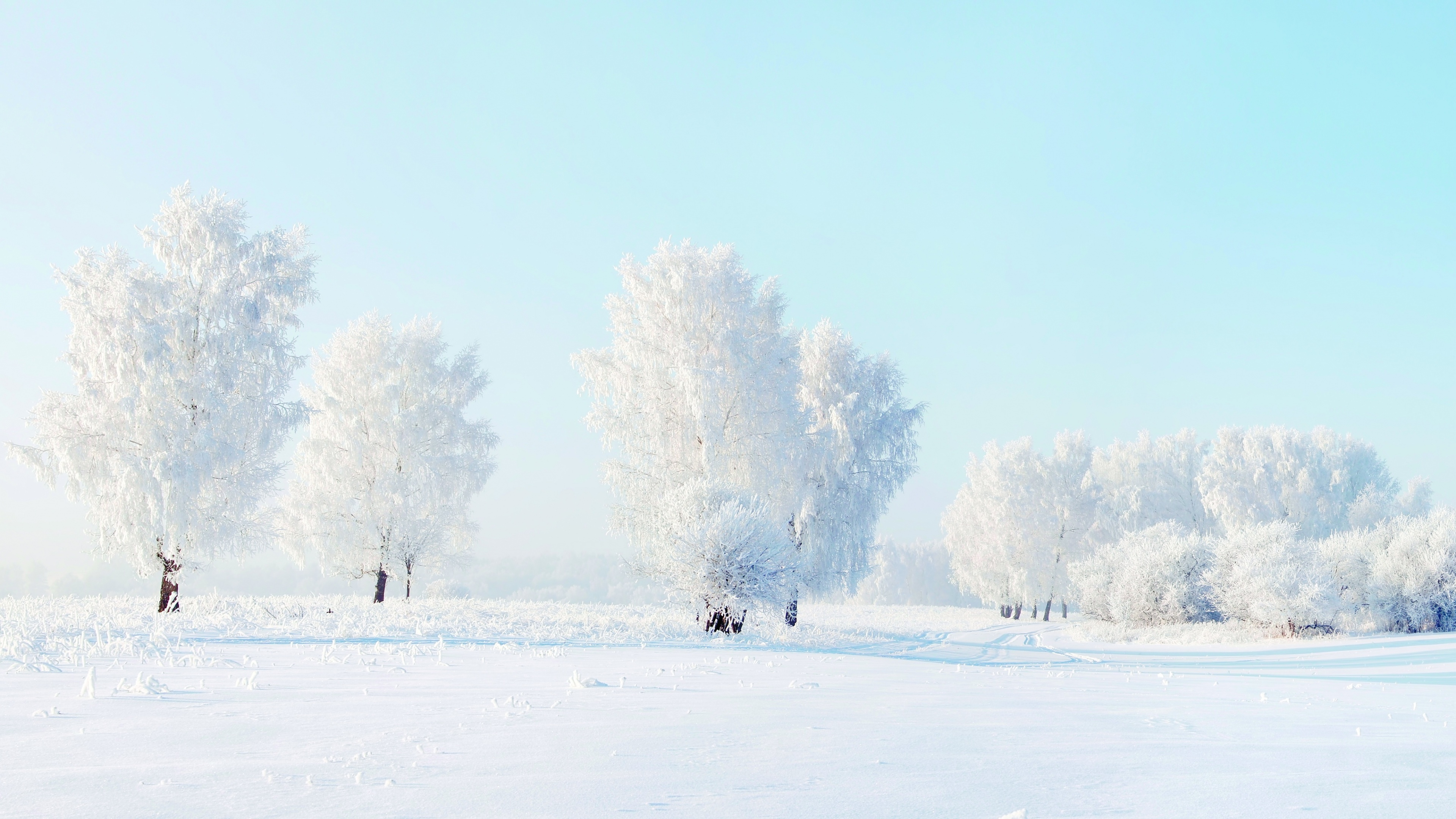 winter and snow trees - photo #37