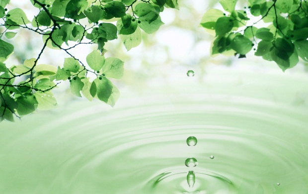 3D Leaves and Water Drop (click to view)