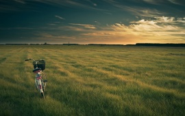 A Bicycle on an Empty Green Field