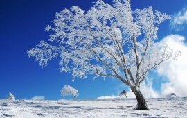 A Tree Alone In The Winter