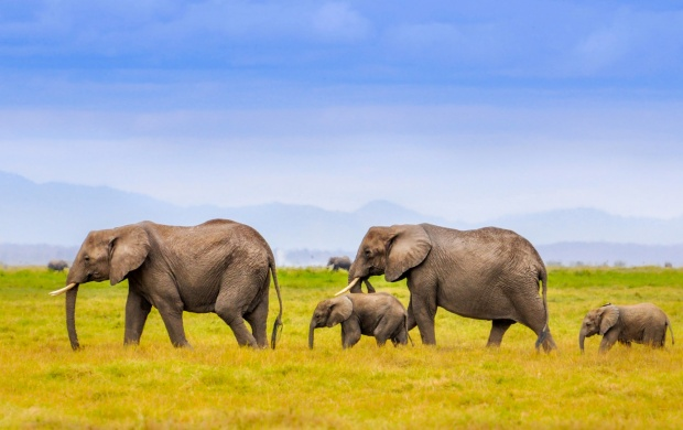 African Elephants Family Landscape (click to view)