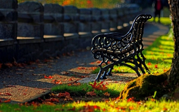 Alone Autumn Park Bench (click to view)