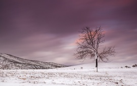 Alone Frozen Tree In Winter Snowy