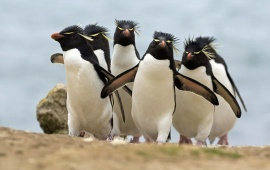 Amazing Penguins