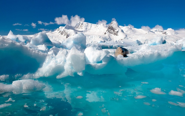 Antarctic Ice Ocean (click to view)