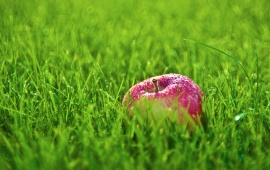 Apple On Green Grass