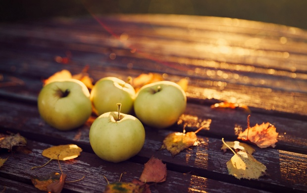 Apples Harvest Autumn (click to view)