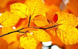Autumn Branch Leaves