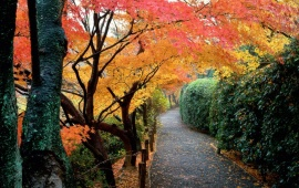 Autumn Colors, Kyoto, Japan