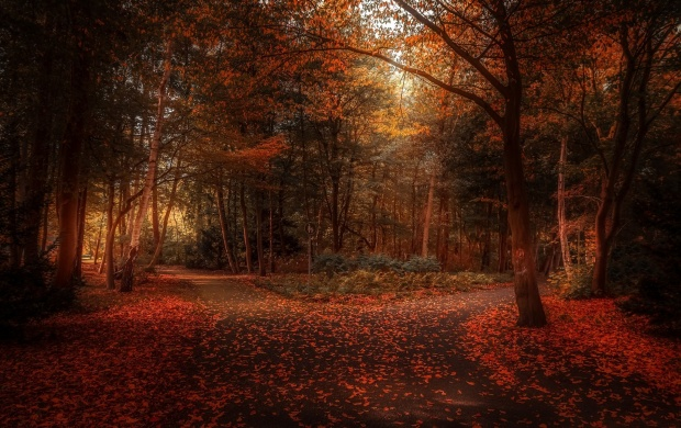 Autumn Day In The Forest (click to view)