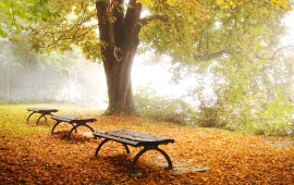 Autumn Fall Tree Bench