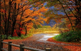Autumn Forest And Asphalt Road