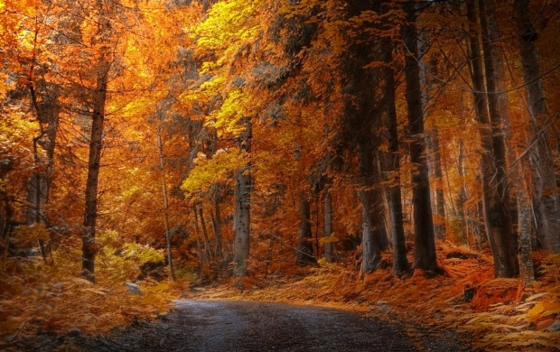 Autumn Forest Road (click to view)