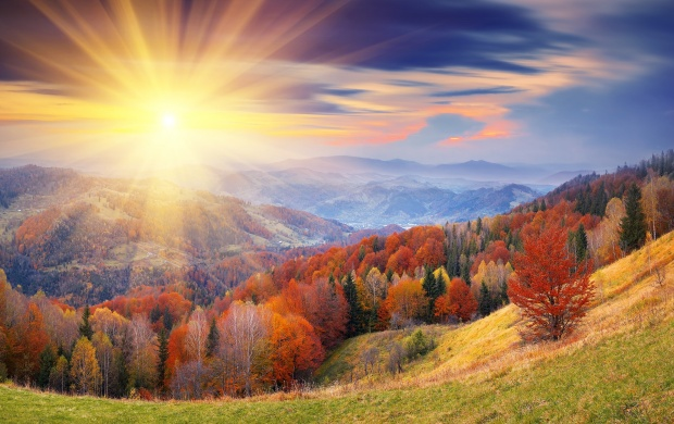 Autumn Forest Sunrise (click to view)