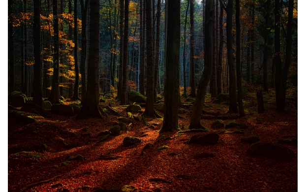 Autumn Forest Trees (click to view)