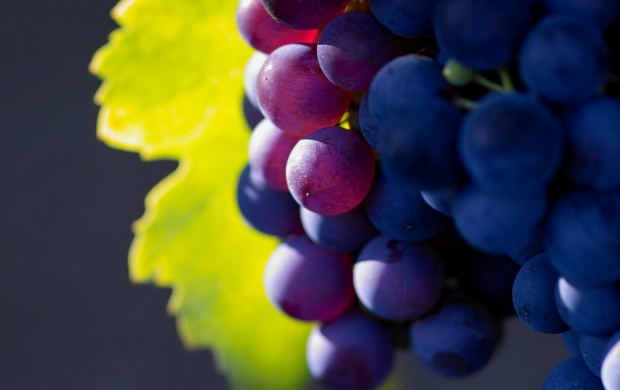 Autumn Grapes (click to view)