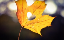 Autumn Heart Bokeh
