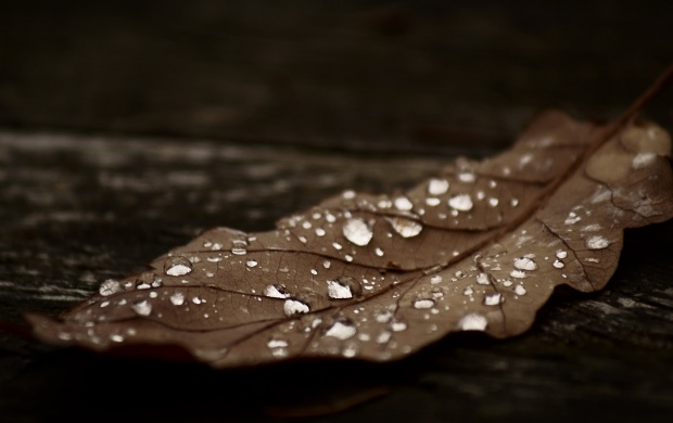 Autumn Leaf With Water Drops (click to view)
