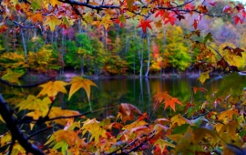 Autumn Leaves And Lake