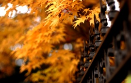 Autumn Leaves And Lattice Fence